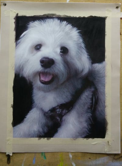 A painting of dog like mammal, dog breed, maltese, dog, dog breed group, bichon, snout, havanese, bolognese, miniature poodle