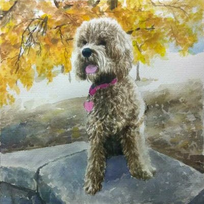A painting of dog breed, dog, dog like mammal, sapsali, schnoodle, cockapoo, dog crossbreeds, snout, terrier, goldendoodle