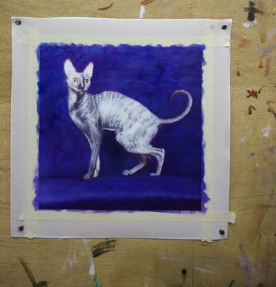 A painting of cat, fauna, small to medium sized cats, mammal, cat like mammal, peterbald, organism, tail, wildlife, cornish rex