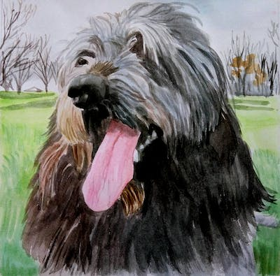 A painting of dog, dog like mammal, dog breed, catalan sheepdog, sapsali, cão da serra de aires, irish wolfhound, snout, carnivoran, bearded collie