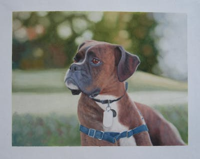 A painting of dog, dog breed, boxer, dog like mammal, snout, dog crossbreeds, grass, carnivoran