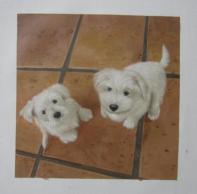 A painting of dog like mammal, dog, dog breed, maltese, vertebrate, dog breed group, schnoodle, west highland white terrier, coton de tulear, carnivoran