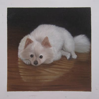 A painting of dog, dog like mammal, dog breed, volpino italiano, german spitz, german spitz klein, mammal, pomeranian, dog breed group, german spitz mittel