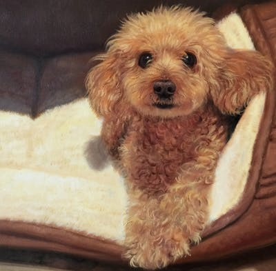 A painting of dog, dog like mammal, dog breed, miniature poodle, poodle, toy poodle, dog breed group, dog crossbreeds, goldendoodle, water dog