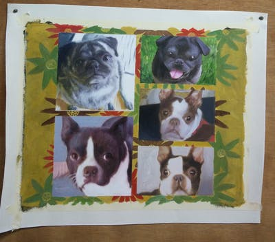 A painting of boston terrier, dog, dog breed, dog like mammal, snout, dog breed group, carnivoran, toy bulldog, non sporting group