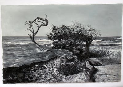 A painting of tree, black and white, woody plant, monochrome photography, water, plant, shore, sea, sky, branch