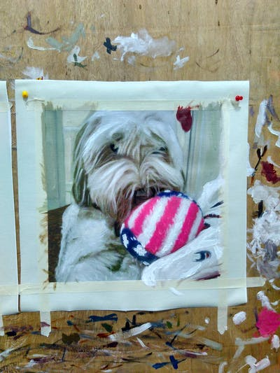 A painting of dog, dog breed, dog like mammal, vertebrate, dog breed group, sapsali, tibetan terrier, snout, schnoodle, lhasa apso