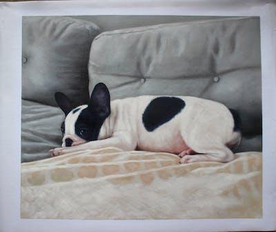 A painting of dog like mammal, dog, dog breed, french bulldog, boston terrier, carnivoran, dog breed group, snout, bulldog, non sporting group