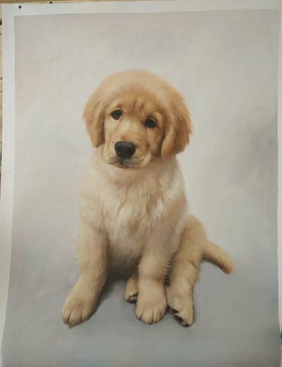 A painting of dog, dog like mammal, dog breed, dog breed group, golden retriever, retriever, carnivoran, snout, puppy, sporting group