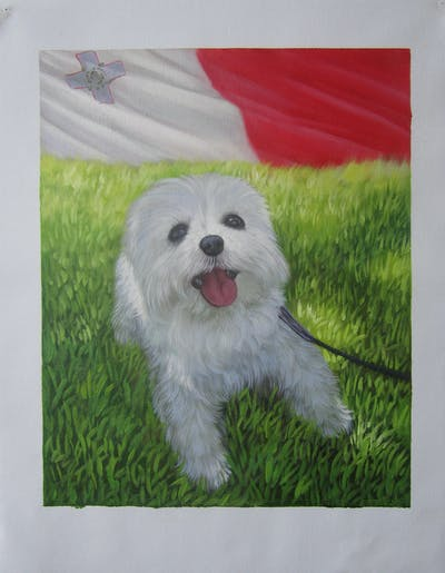 A painting of dog like mammal, dog, maltese, dog breed, vertebrate, dog breed group, morkie, carnivoran, schnoodle, havanese
