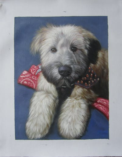 A painting of dog, dog breed, dog like mammal, dog breed group, sapsali, terrier, catalan sheepdog, fur, snout, irish soft coated wheaten terrier