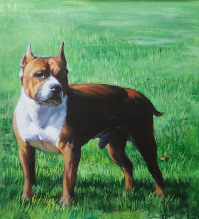 A painting of dog, dog like mammal, dog breed, dog breed group, american staffordshire terrier, american pit bull terrier, carnivoran, bulldog
