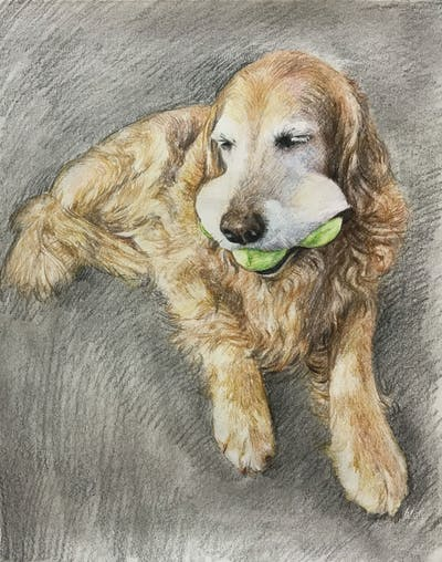A painting of dog, golden retriever, dog breed, dog breed group, retriever, dog like mammal, snout, sporting group, dog crossbreeds, companion dog