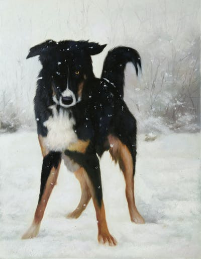 A painting of dog, dog like mammal, dog breed, snow, dog breed group, winter, freezing, australian shepherd, bernese mountain dog, english shepherd