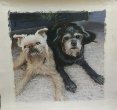A painting of dog, dog breed, dog like mammal, snout, cairn terrier, sapsali, photo caption, dog breed group, carnivoran, terrier