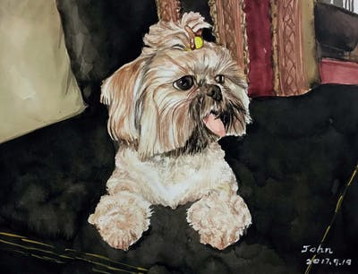A painting of dog, dog like mammal, dog breed, dog breed group, shih tzu, carnivoran, lhasa apso, snout, terrier, dog crossbreeds