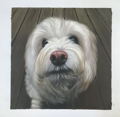 A painting of dog, dog like mammal, dog breed, vertebrate, maltese, nose, snout, havanese, coton de tulear, dog breed group