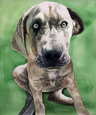 A painting of dog, dog breed, dog like mammal, snout, carnivoran, dog crossbreeds, fawn