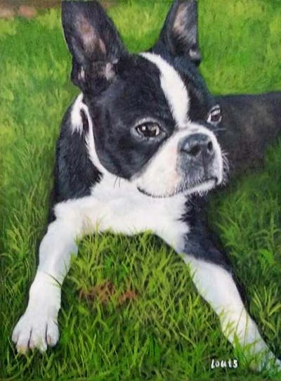 A painting of dog, dog like mammal, dog breed, boston terrier, dog breed group, snout, toy bulldog, carnivoran, grass, companion dog