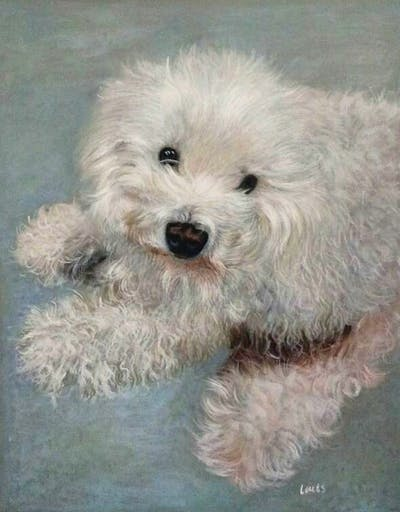 A painting of dog like mammal, dog breed, miniature poodle, dog, dog breed group, maltese, toy poodle, poodle, poodle crossbreed, bichon frisé