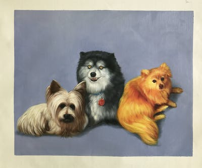 A painting of dog breed, dog like mammal, dog, dog breed group, german spitz, pomeranian, snout, german spitz klein, german spitz mittel, canadian eskimo dog