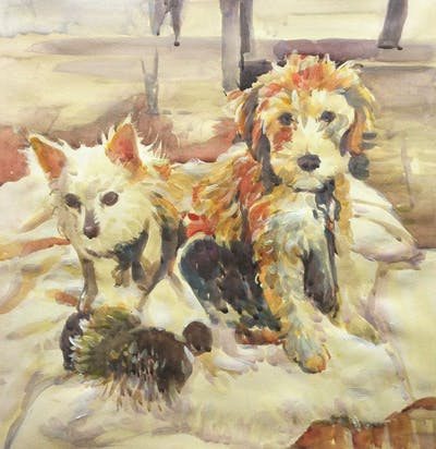 A painting of dog breed, dog, dog like mammal, dog breed group, dog crossbreeds, schnoodle, puppy, goldendoodle, carnivoran, companion dog