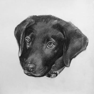 A painting of cat, small to medium sized cats, cat like mammal, fauna, dog breed, carnivoran, dog like mammal, snout, dog crossbreeds, tail