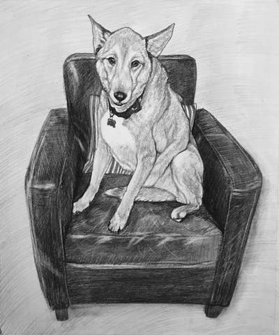 A painting of dog, dog breed, dog like mammal, furniture, dog breed group, dog crossbreeds, tail, chair, dog bed, carnivoran