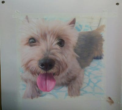 A painting of dog, dog like mammal, dog breed, dog breed group, vertebrate, terrier, norfolk terrier, cairn terrier, australian terrier, snout