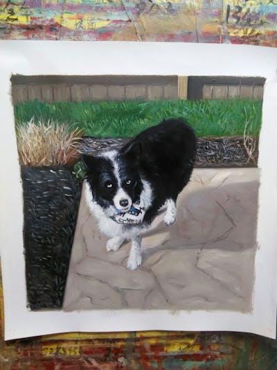 A painting of dog, dog like mammal, dog breed, border collie, dog breed group, welsh sheepdog, karelian bear dog, english shepherd, herding dog