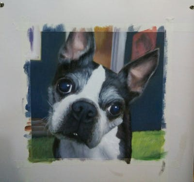 A painting of boston terrier, dog, dog like mammal, dog breed, dog breed group, snout, carnivoran, companion dog, non sporting group, french bulldog