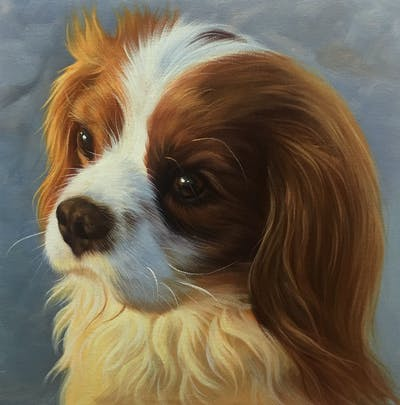 A painting of dog, dog like mammal, dog breed, king charles spaniel, cavalier king charles spaniel, spaniel, snout, carnivoran, dog breed group, companion dog