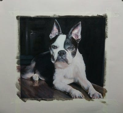 A painting of dog, dog like mammal, dog breed, boston terrier, vertebrate, snout, dog breed group, carnivoran, toy bulldog, french bulldog