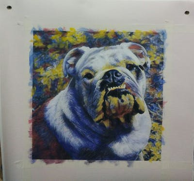 A painting of dog, dog like mammal, bulldog, old english bulldog, dog breed, toy bulldog, mammal, olde english bulldogge, dog breed group, australian bulldog