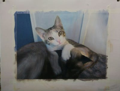 A painting of cat, small to medium sized cats, cat like mammal, whiskers, kitten, domestic short haired cat, aegean cat, fur, snowshoe, european shorthair
