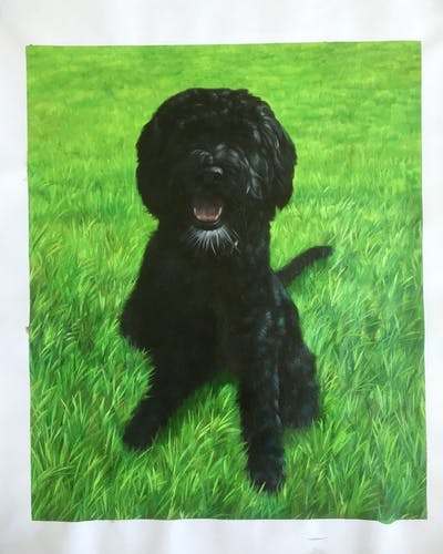 A painting of dog like mammal, dog, dog breed, dog breed group, spanish water dog, dog crossbreeds, schnoodle, cockapoo, portuguese water dog, miniature poodle