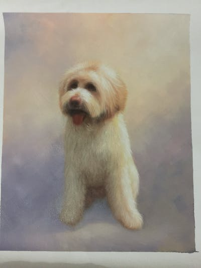 A painting of dog, dog breed, dog like mammal, dog breed group, poodle crossbreed, dog crossbreeds, goldendoodle, schnoodle, cockapoo, snout