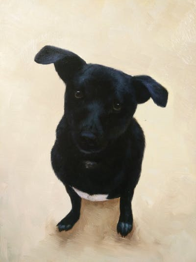 A painting of dog, dog breed, dog like mammal, dog breed group, snout, dog crossbreeds, patterdale terrier, borador, sporting group, carnivoran