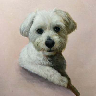 A painting of dog, dog like mammal, dog breed, maltese, morkie, schnoodle, havanese, snout, bichon, dog crossbreeds