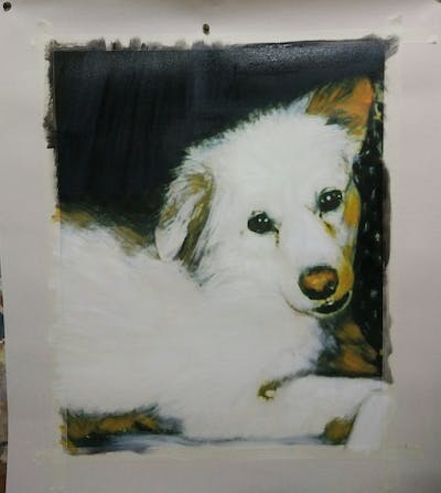 A painting of dog, dog breed, dog breed group, dog like mammal, snout, pomeranian, german spitz, companion dog, dog crossbreeds, volpino italiano