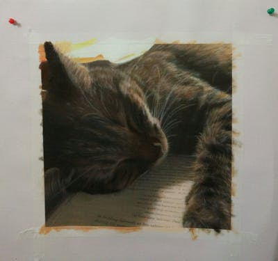 A painting of cat, whiskers, small to medium sized cats, fauna, photo caption, cat like mammal, fur, snout, claw, paw