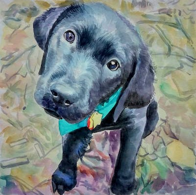 A painting of dog, dog like mammal, mammal, dog breed, labrador retriever, snout, grass, puppy, sporting group, carnivoran