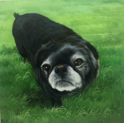 A painting of pug, dog like mammal, dog, dog breed, grass, snout, dog breed group, carnivoran, toy bulldog, companion dog