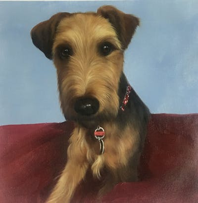 A painting of dog, dog breed, dog like mammal, airedale terrier, terrier, snout, welsh terrier, lakeland terrier, carnivoran, irish terrier