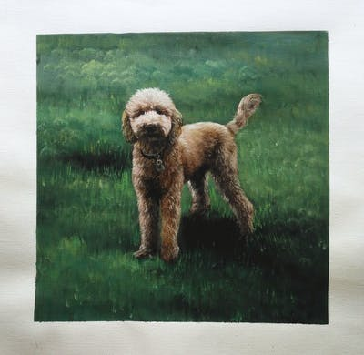 A painting of dog, dog like mammal, dog breed, goldendoodle, grass, dog crossbreeds, dog breed group, poodle, miniature poodle, cockapoo