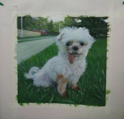 A painting of dog breed, dog like mammal, dog, dog breed group, shih tzu, maltese, morkie, poodle crossbreed, carnivoran, dog crossbreeds