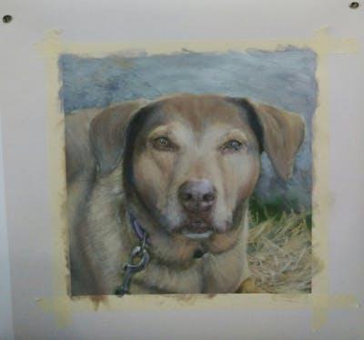 A painting of dog, dog breed, snout, dog like mammal, hunting dog, street dog, sporting group, carnivoran