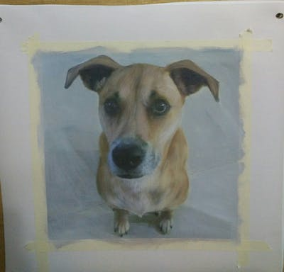 A painting of dog breed, dog, street dog, dog breed group, snout, dog like mammal, dog crossbreeds, black mouth cur