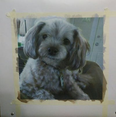 A painting of dog, dog like mammal, dog breed, poodle crossbreed, dog breed group, cavapoo, dog crossbreeds, cockapoo, schnoodle, cavachon