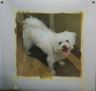 A painting of dog like mammal, dog, dog breed, maltese, dog breed group, bichon, carnivoran, schnoodle, havanese, snout